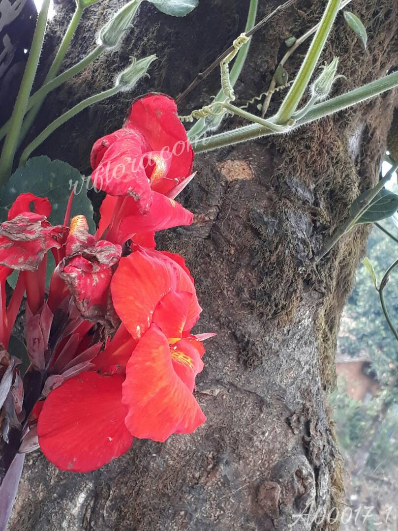 Beautiful Red flower found at Coorg