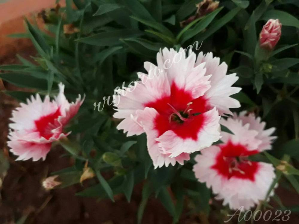 Beautiful, different and attractive flower at Lalbhag, Bangalore