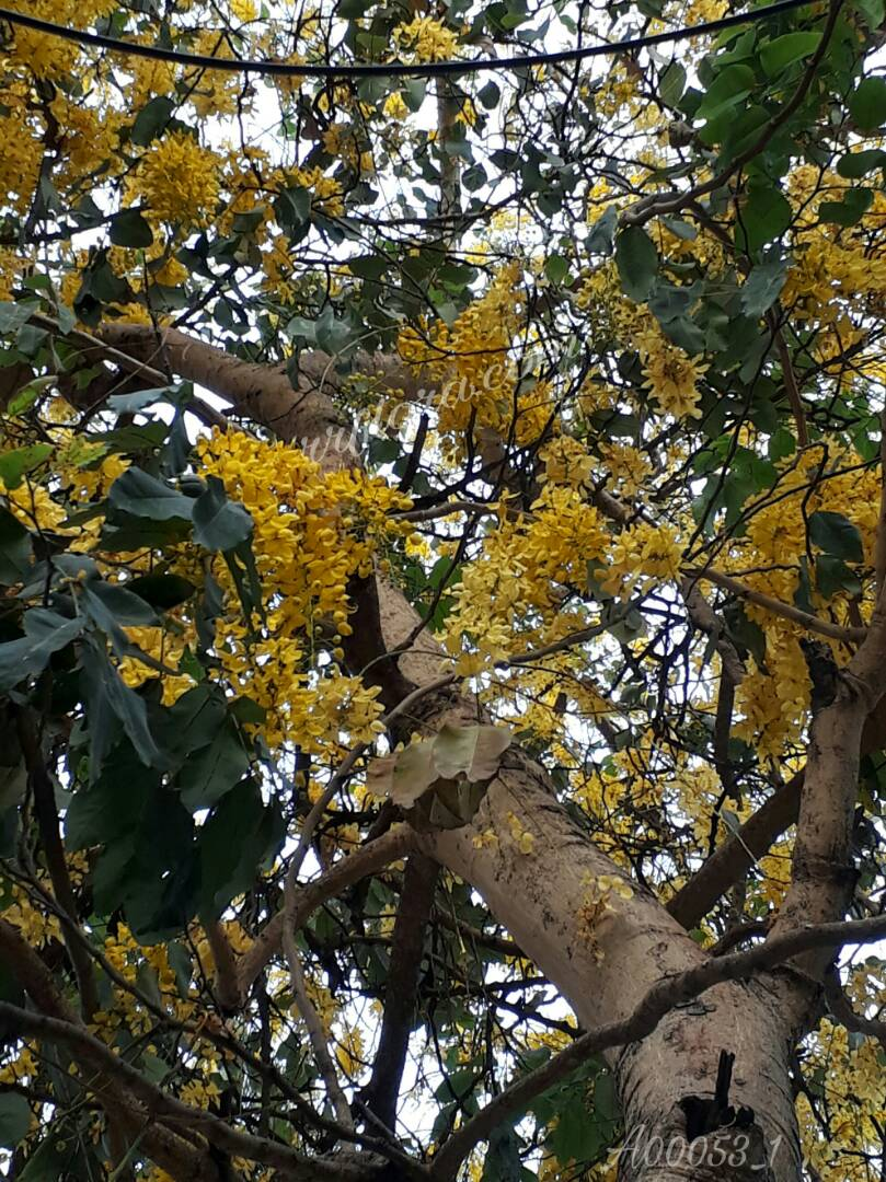 Colourful and attractive hanging flowers at Rajahmundry.
